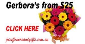 Flowers Alexandria